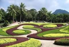 Plantas e flores para canteiros, jardins e