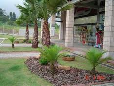 Plantas para parques, jardins suspensos,