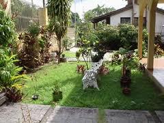 Árvores decorativas para áreas verdes, paisagismo,