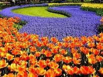 Compro Produção de mudas de plantas e flores ornamentais para paisagísmo.