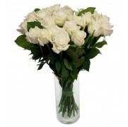 Rosas Alavanche