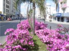 Plantas para vanteiros de flores e urbanismo.