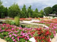 Mudas de flores e plantas para cas e ambientes