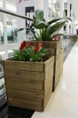 Mudas de plantas para canteiros de flores e