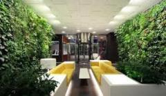 Plantas para execuão de projetos de jardins,