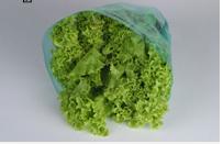Embalagens Cônicas: Sacos plásticos