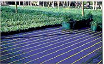 Ground Cover - também conhecido como ráfia de