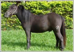 Cavalo Corisco