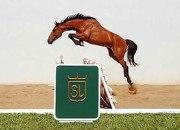 Cavalo Sambo