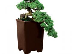 Bonsai Cascata