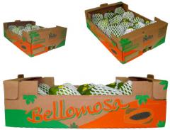 Bello embalagens Formosa Big Box 12