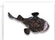 Peixe Sapo