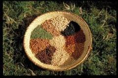 Sementes para agricultura