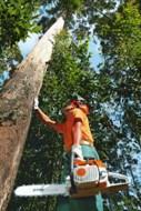 Motosserras para o mercado florestal