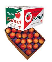 Maça Festival
