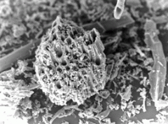Carbono Ativado
