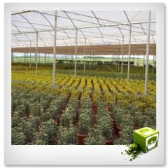 Estufas para plantas e flores