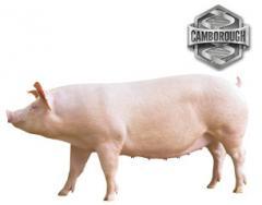 Camborough