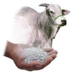 Sulfato de Cálcio