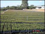 Irrigação por Micro Aspersão