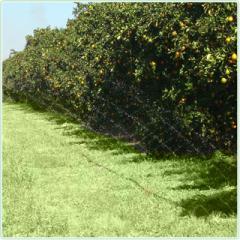 Sistema de Irrigação por Tripa (Cinta)