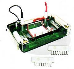 Eletroforese horizontal