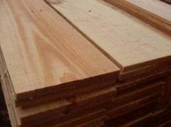Tábuas de Pinus