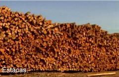 Estacas em madeira