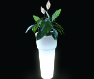 Vaso iluminado