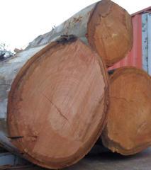 Logs de eucalipto
