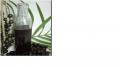 Óleo virgem ou purificado de Açaí (Euterpe oleracea)