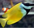 Loja de Peixes