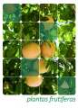 Plantas frutifeiras