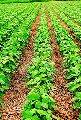 Capítulo VI - Comportamento do glifosato no solo e na água