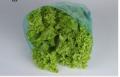 Embalagens Cônicas: Sacos plásticos microperfurados de formato cônico ideal para hortaliças.