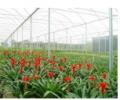 Tricapa-   linha de filmes Tricapa reúne o que há de mais avançado em tecnologia de filmes agrícolas.
