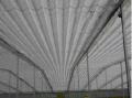 Cobertura de parreirais - o Vitiforte é um tecido de polietileno transparente e incolor revestido com película impermeabilizante, com faixas de reforço centrais e laterais.