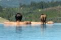 Acqua 100 e   Acqua 200 para piscinas - são dois modelos com alta capacidade de remoção de partículas e impurezas melhorando a qualidade e de água da piscina.