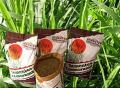 Ruziziensis - pastejo e formação de palhada para plantio direto de culturas anuais.