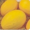 Melăo Melody - híbrido amarelo de formato alongado e grande.