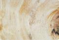 Compensado de Pinus C+/C Fenólico