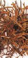 QUIDITAT SR (bioativo à base de polissacarídeos sulfatados)