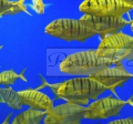 Fotografia - Aquário de peixes
