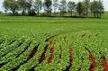 Nutri Phite Fertilizante líquido(foliar)