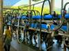 Em MG, preço do leite em alta motiva investimentos nas propriedades