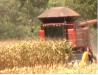Produtores de milho safrinha têm expectativa de boa safra do grão