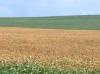 Preços da soja seguem em alta mesmo com entrada da nova safra