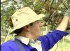No RS, produtores de kiwi esperam aumento de 20% nesta safra