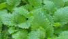 Cientistas tentam imitar fotossíntese para produzir energia