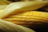 Estudo descobre que o milho está presente na dieta da população da costa do Peru há 5 mil anos